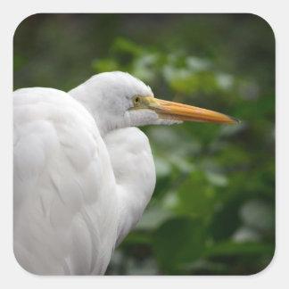 Egret que parece derecho contra pájaro verde de c calcomania cuadradas personalizadas