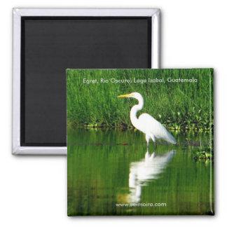Egret, Rio Oscuro, Lago Izabal, Guatemala 2 Inch Square Magnet
