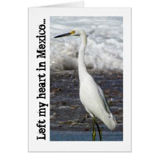 Egret Standing Tall; Mexico Souvenir Card