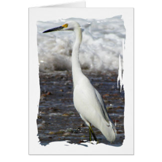Egret Standing Tall; Thank You Card