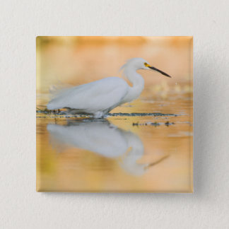 Egret when the sun is setting pinback button