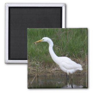 Egret with fish 2 inch square magnet