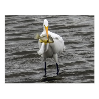 Egret With Lunch Postcard