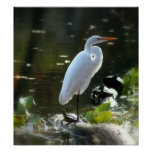 Egret with Turtles Poster
