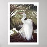 Egret y palmas póster