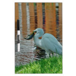 Egret y su captura pizarra
