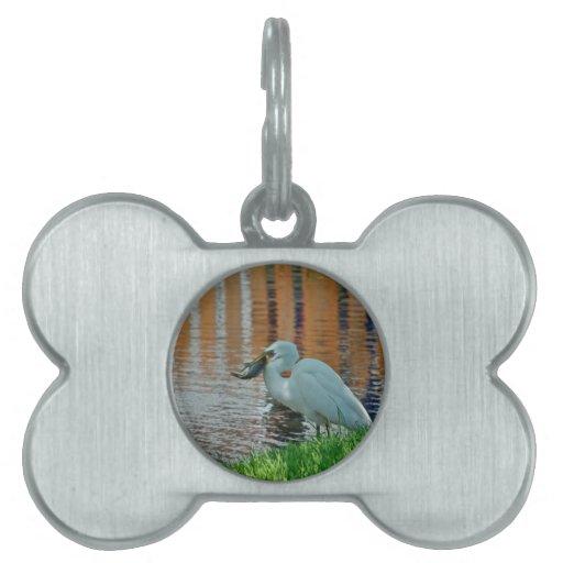 Egret y su captura placa de nombre de mascota