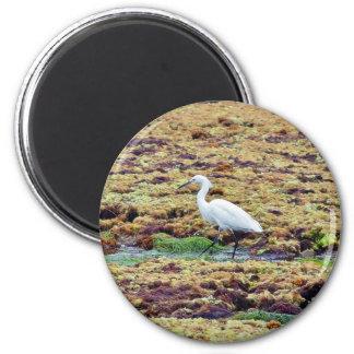 Egrets Birds Seaweed Refrigerator Magnets