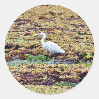 Egrets Birds Seaweed Round Stickers