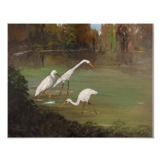 Egrets de Illinois Fotografías