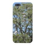 Egrets en un árbol iPhone 5 cárcasa