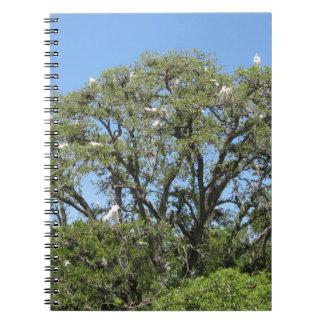 Egrets en un cuaderno del árbol