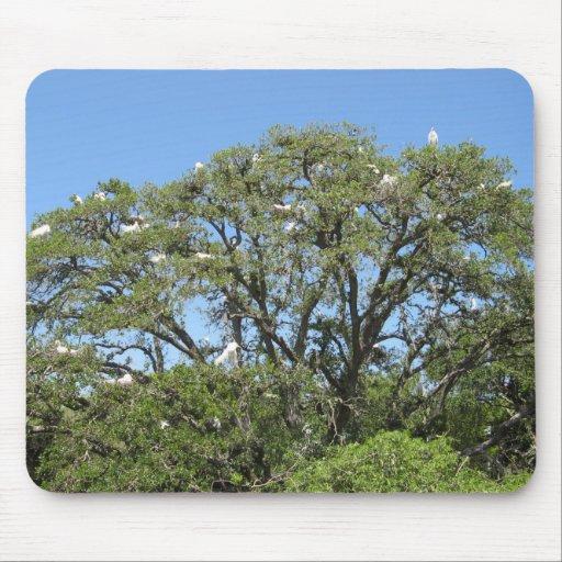 Egrets en un mousepad del árbol tapetes de raton