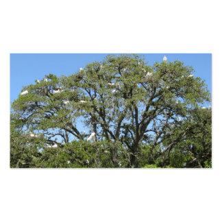 Egrets en un personalizable del árbol tarjetas de negocios