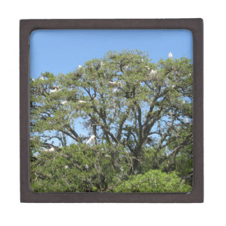 Egrets in a Tree Premium Gift Box