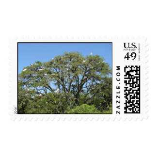 Egrets in a tree stamp