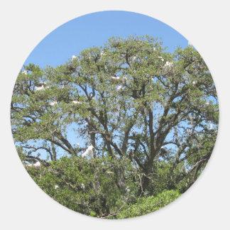 Egrets in a tree sticker