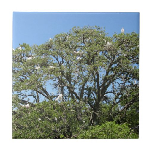 Egrets in a Tree tile