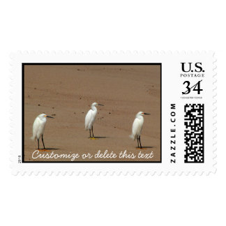 Egrets Loitering on Beach Postage Stamp