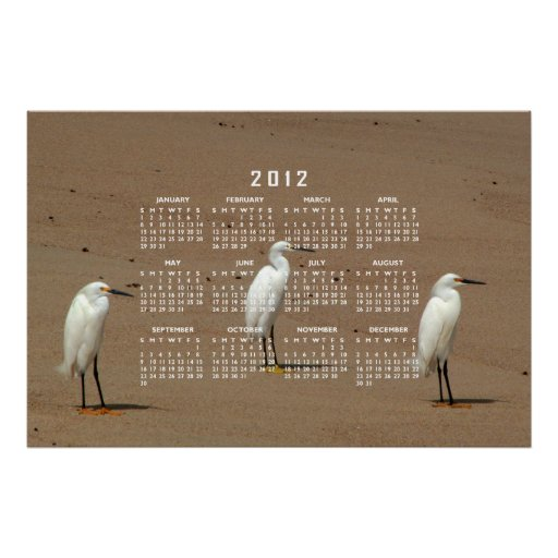 Egrets Loitering on Beach Posters