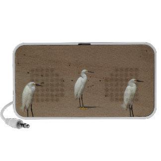 Egrets Loitering on Beach iPhone Speaker