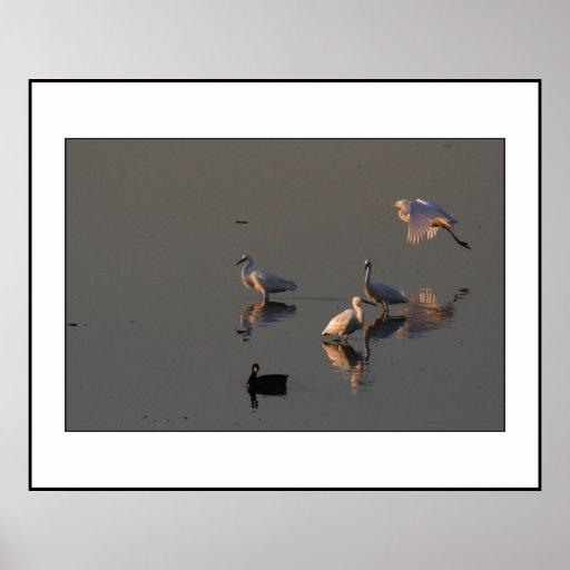 Egrets nevados en la impresión del amanecer posters