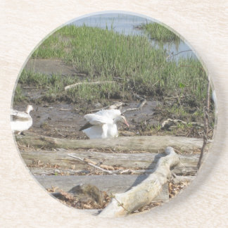 Egrets on the Marsh Drink Coasters