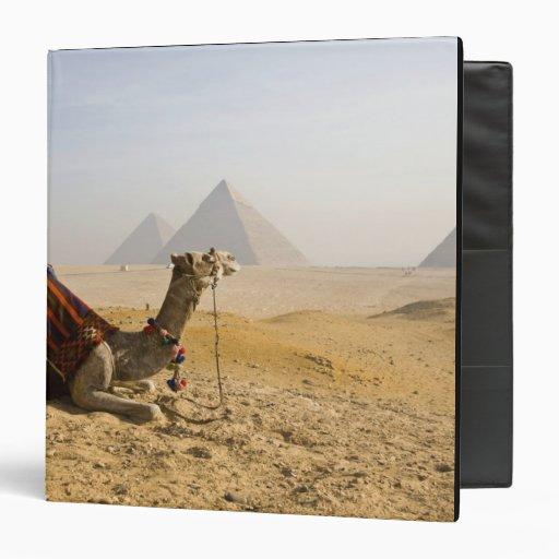 Egypt, Cairo. A lone camel gazes across the Binder