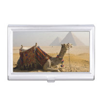 Egypt, Cairo. A lone camel gazes across the Business Card Holder