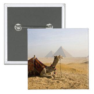 Egypt, Cairo. A lone camel gazes across the Pinback Buttons