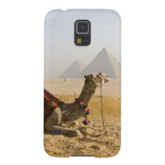 Egypt, Cairo. A lone camel gazes across the Case For Galaxy S5