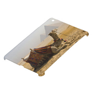 Egypt, Cairo. A lone camel gazes across the iPad Mini Cases