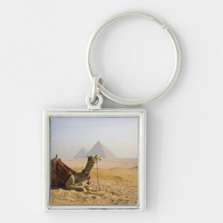 Egypt, Cairo. A lone camel gazes across the Silver-Colored Square Keychain