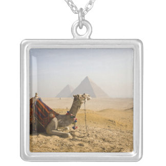 Egypt, Cairo. A lone camel gazes across the Silver Plated Necklace