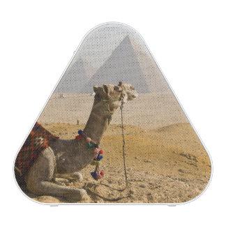 Egypt, Cairo. A lone camel gazes across the Speaker