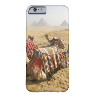 Egypt, Cairo. Resting camels gaze across the 2 Barely There iPhone 6 Case