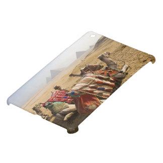 Egypt, Cairo. Resting camels gaze across the 2 iPad Mini Cases