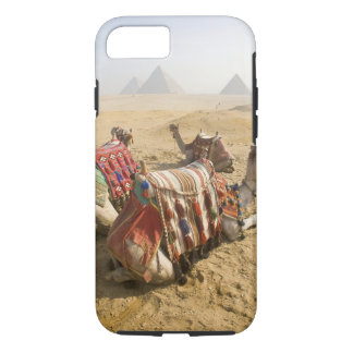 Egypt, Cairo. Resting camels gaze across the 2 iPhone 7 Case