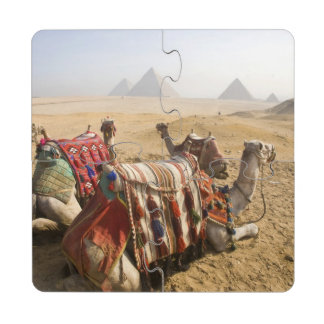 Egypt, Cairo. Resting camels gaze across the 2 Puzzle Coaster