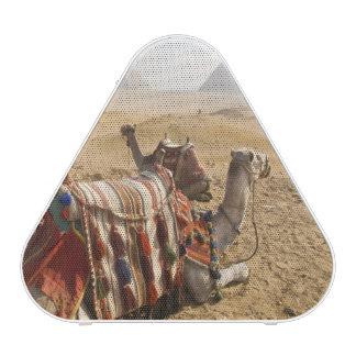 Egypt, Cairo. Resting camels gaze across the Bluetooth Speaker