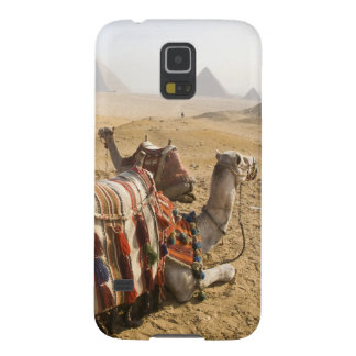 Egypt, Cairo. Resting camels gaze across the Case For Galaxy S5