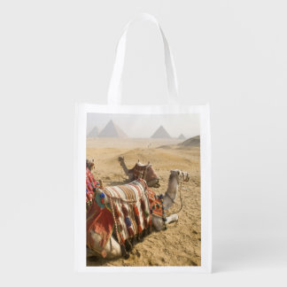Egypt, Cairo. Resting camels gaze across the Grocery Bags