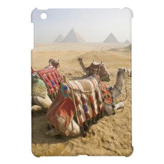 Egypt, Cairo. Resting camels gaze across the iPad Mini Covers