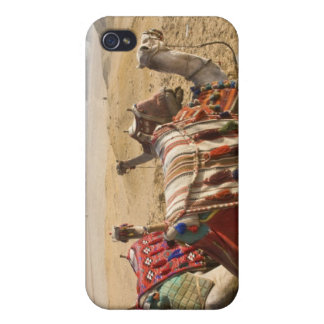 Egypt, Cairo. Resting camels gaze across the iPhone 4 Covers