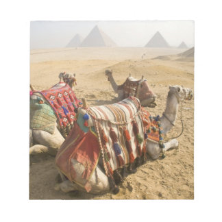 Egypt, Cairo. Resting camels gaze across the Notepad