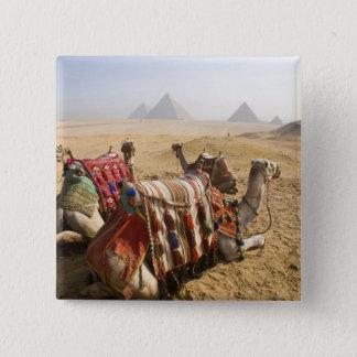 Egypt, Cairo. Resting camels gaze across the Pinback Button