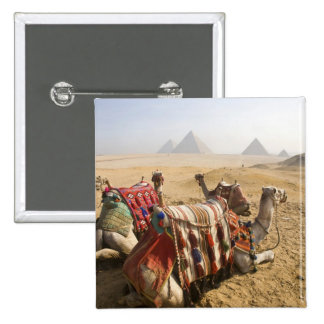 Egypt, Cairo. Resting camels gaze across the Pinback Button