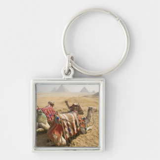 Egypt, Cairo. Resting camels gaze across the Silver-Colored Square Keychain