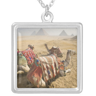 Egypt, Cairo. Resting camels gaze across the Silver Plated Necklace