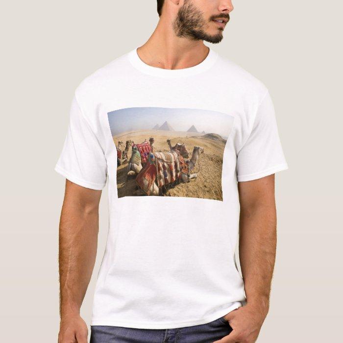 Egypt, Cairo. Resting camels gaze across the T-Shirt